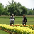 razstava_tulipani